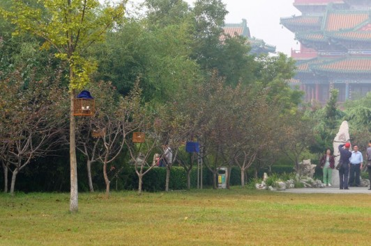 Automne à Nanjing - Chine